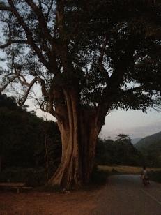 Was für ein Baum, so schön, wie ein altes Gesicht.